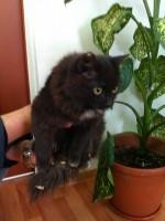 Котенок с заимки Лыковых
